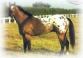 ♣collections'horses♣